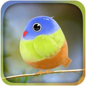 Cute Bird Live Wallpaper